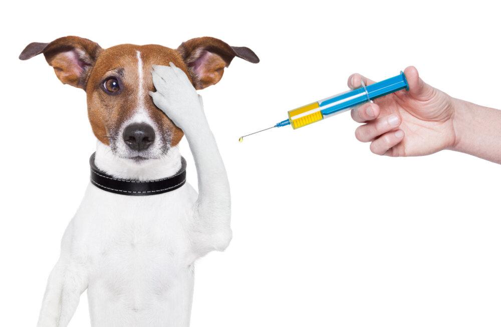 Lemmikloom kardab arsti: kuidas tema hirmu vähendada?