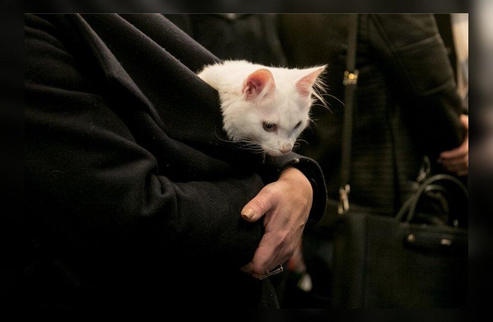Сависаар завел мимимишного котенка Васю. Теперь они всегда вместе