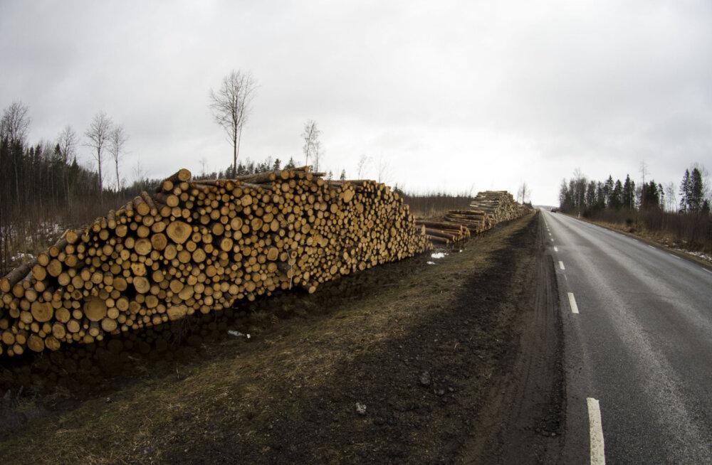 """""""Когда у ответственных за вырубки эстонского леса людей проснется совесть?"""" Объясняем на примере Нарва-Йыэсуу"""