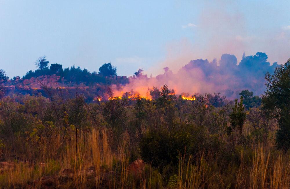 NASA kaardid näitavad, et mitmel pool Aafrikas põleb rohkem kui Brasiilias
