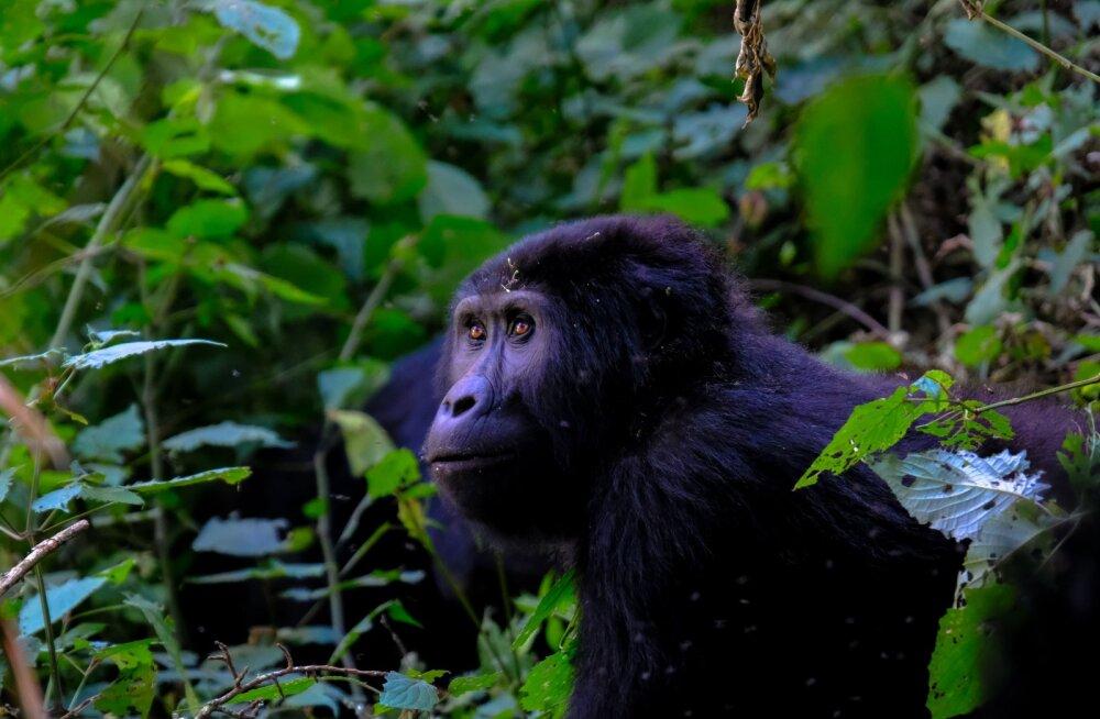 Ametlikult ohustatud liikide arv ületas 28 000, aga see on alles algus