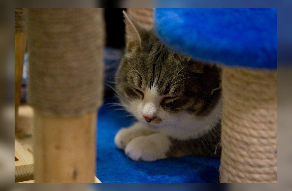 Loomaarst Tiina Toomet vastab lugejate lemmikloomamuredele