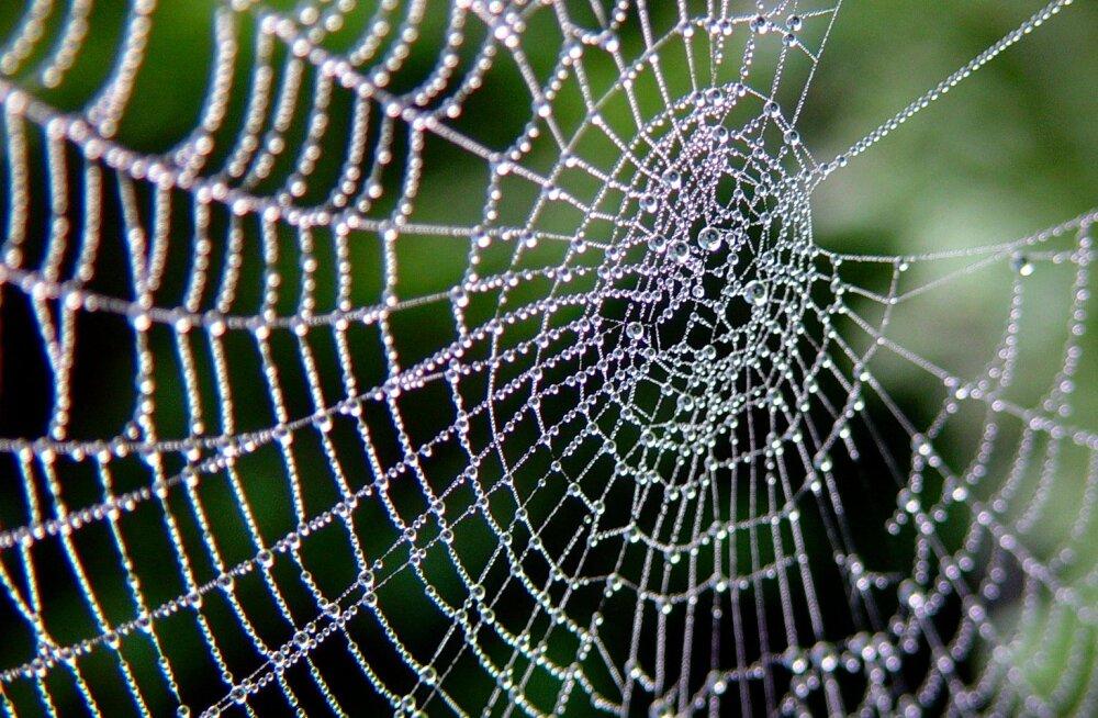 Tavalist ämblikusiidi saab nii tugevaks muuta, et see suudaks kukkuva lennuki kinni püüda