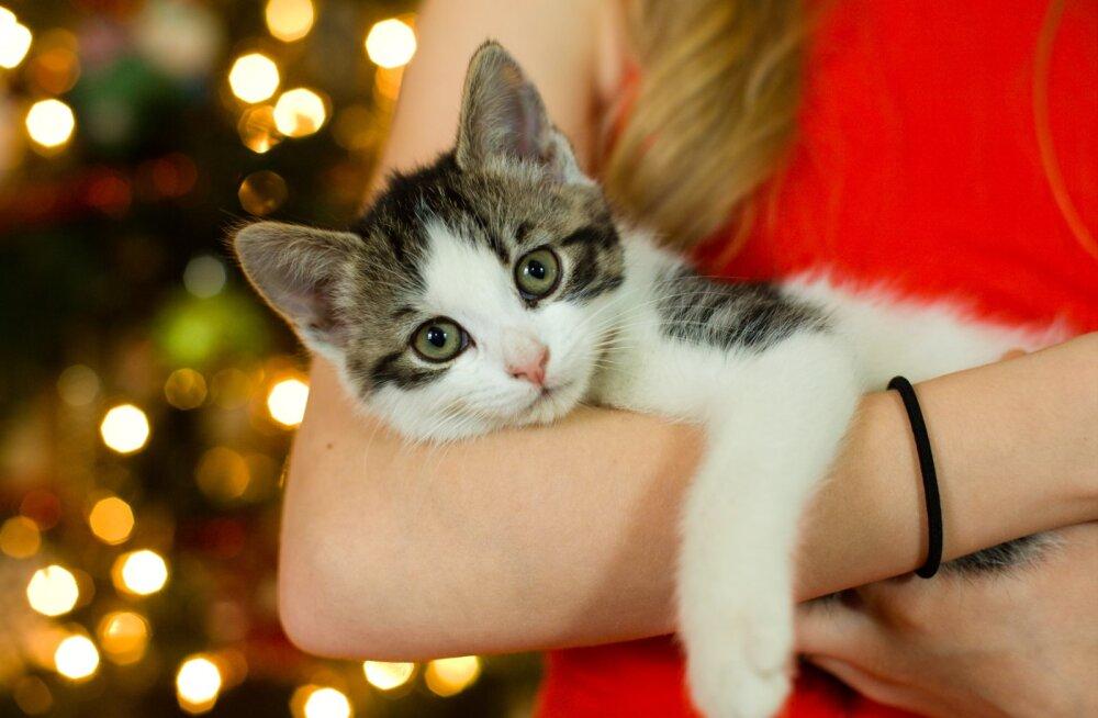 Naine, kes eelistab veeta jõulud omaette: olin terve 24. detsembri kassiga kodus, vaatasin suvalisi filme ja sõin pitsat