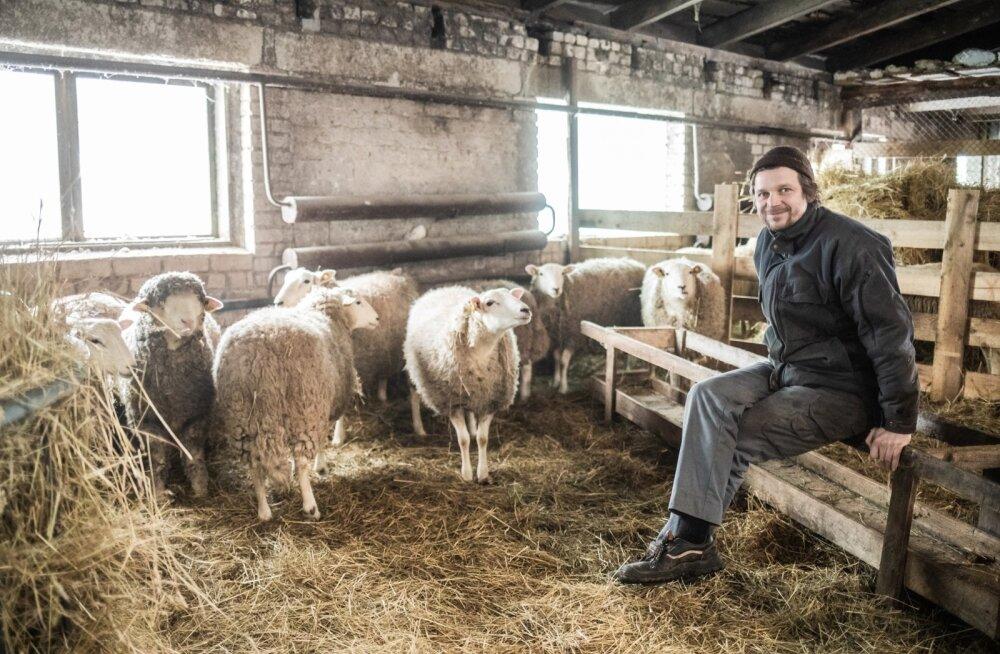 Valgamaa lambakasvataja Mats Meriste usub, et lambakasvatajad pole üldjuhul petturid.
