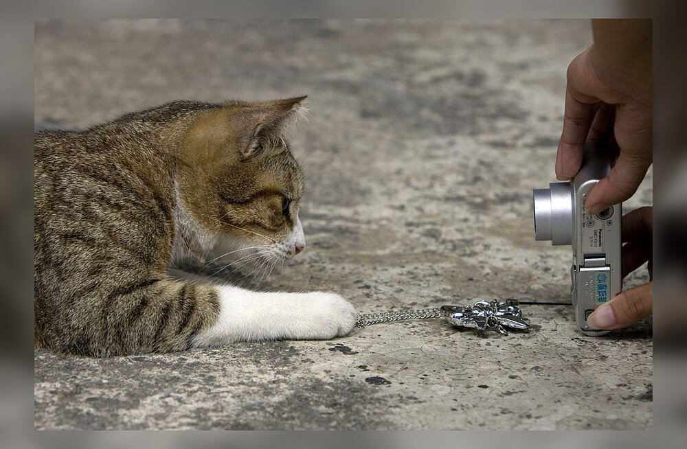 Hääbuv Taiwani kaevandusasula alustas uut elu turistiliku kassikülana