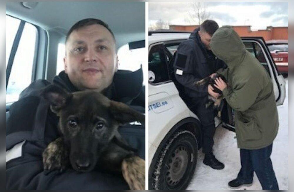 ФОТО | История со счастливым концом: нарвские полицейские вернули потерявшегося щенка хозяину