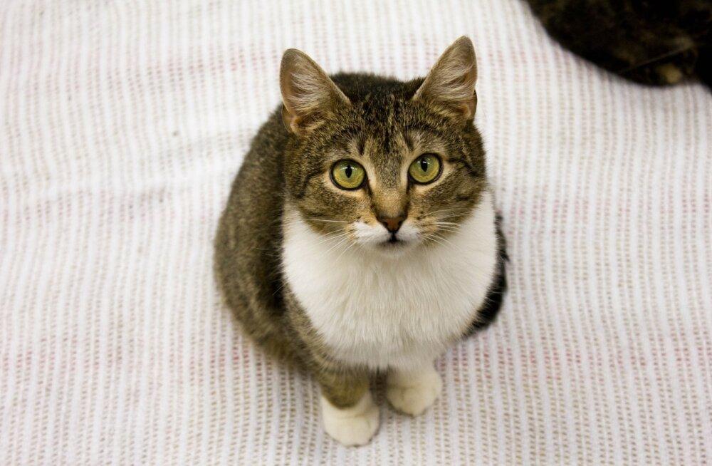 Melissa lugu | kaks aastat kadunud olnud kass leiti imekombel üles: temast sirgus tõeline hurmur