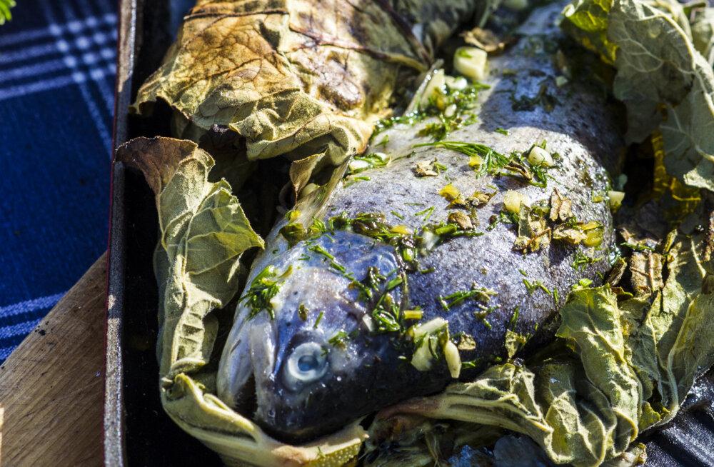 SÄRISEVAT JAANI! Rabarberilehes grillitud beebiforell