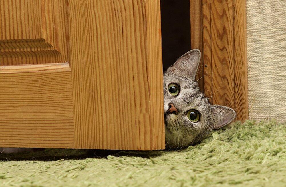 PANE OMA SILMANÄGEMINE PROOVILE! Kui kiiresti leiad Sina fotodele peidetud loomad?