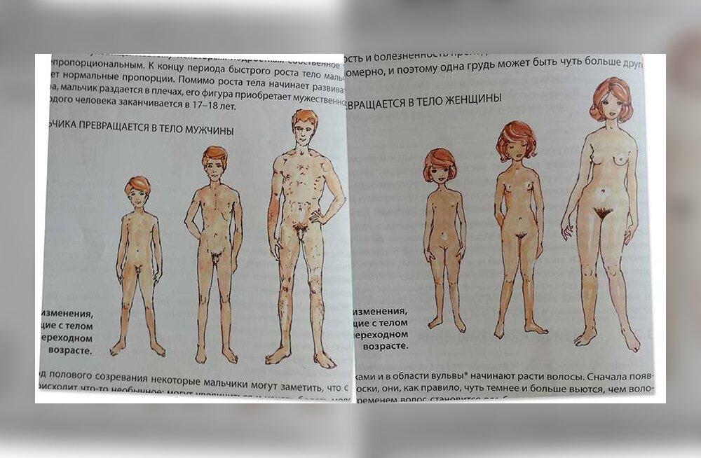 Эстонское общество учителей человековедения: откуда берутся дети, должны знать уже дошкольники