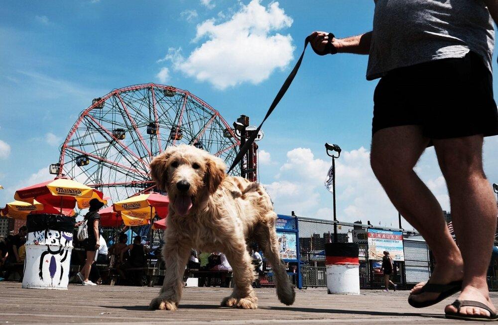 Coney Island pakub midagi nii kahejalgsetele kui ka nende sõpradele. Kuigi kunagisest hiilgusest pole enam palju alles, on koht vähemasti soojal ajal siiani populaarne.