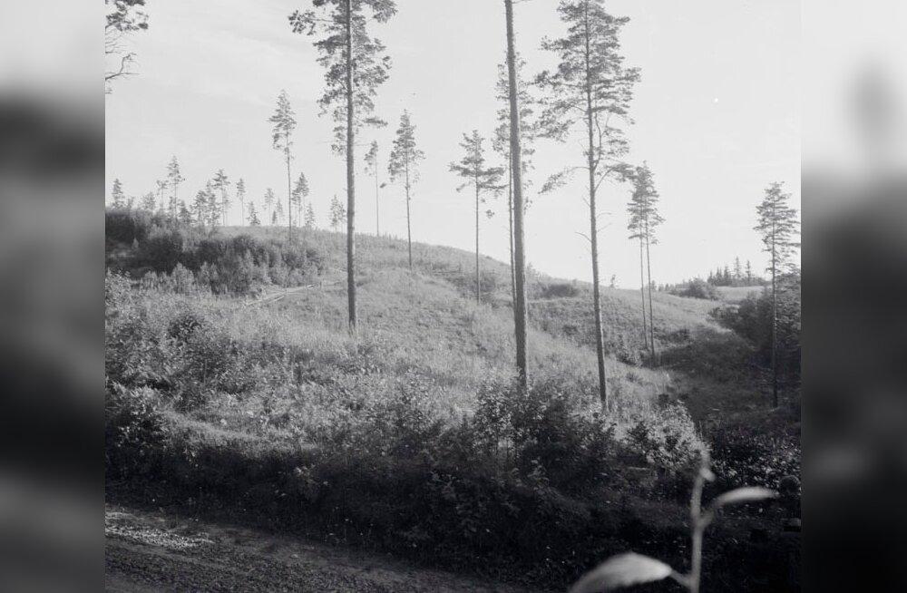 Külvamise ja istutamise kõrval on algusest peale peetud oluliseks ka seemnepuude jätmist.