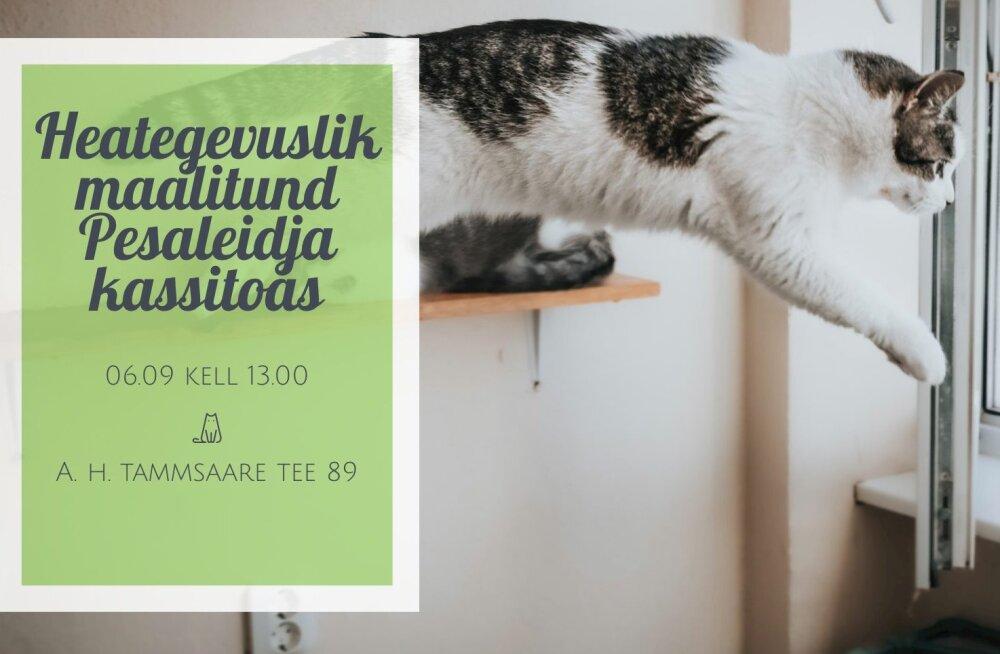 Enneolematu võimalus: leia kodutute kasside hulgast omale muusa ja jäädvusta ta maalile!