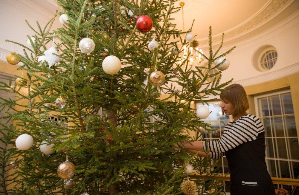 KLÕPS: Kuusk püsti! President Kersti Kaljulaid ehtis kantseleis kaunist jõulupuud