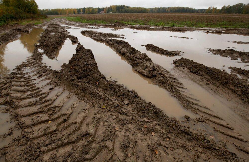 Paljud Eesti põllud muutusid sel sügisel mudamülgasteks, kust saagi koristamine oli võimatu.