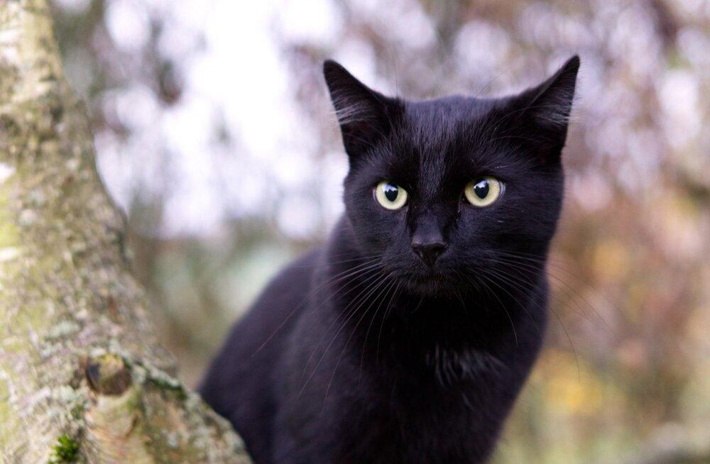 Lugejakiri: Tallinna loomade varjupaik jättis kodutu kassikese pakase kätte