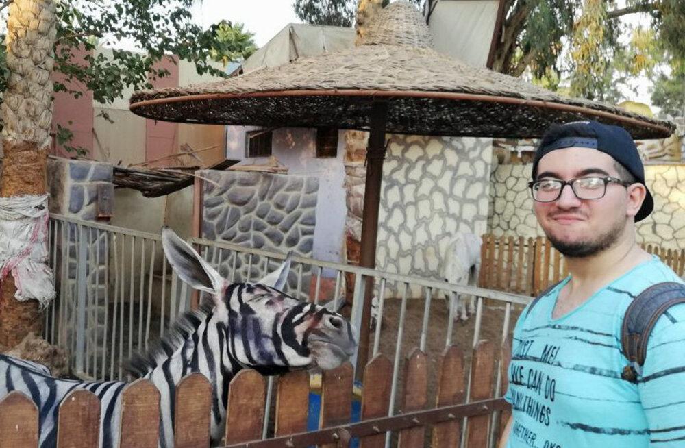Triibud peale ja käib küll: Egiptuse loomaaias võõbati eeslid sebradeks