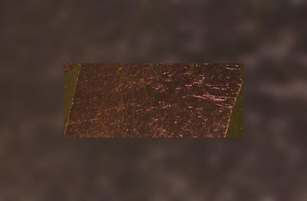 Kullast lehtedega puud hakkavad energiat tootma
