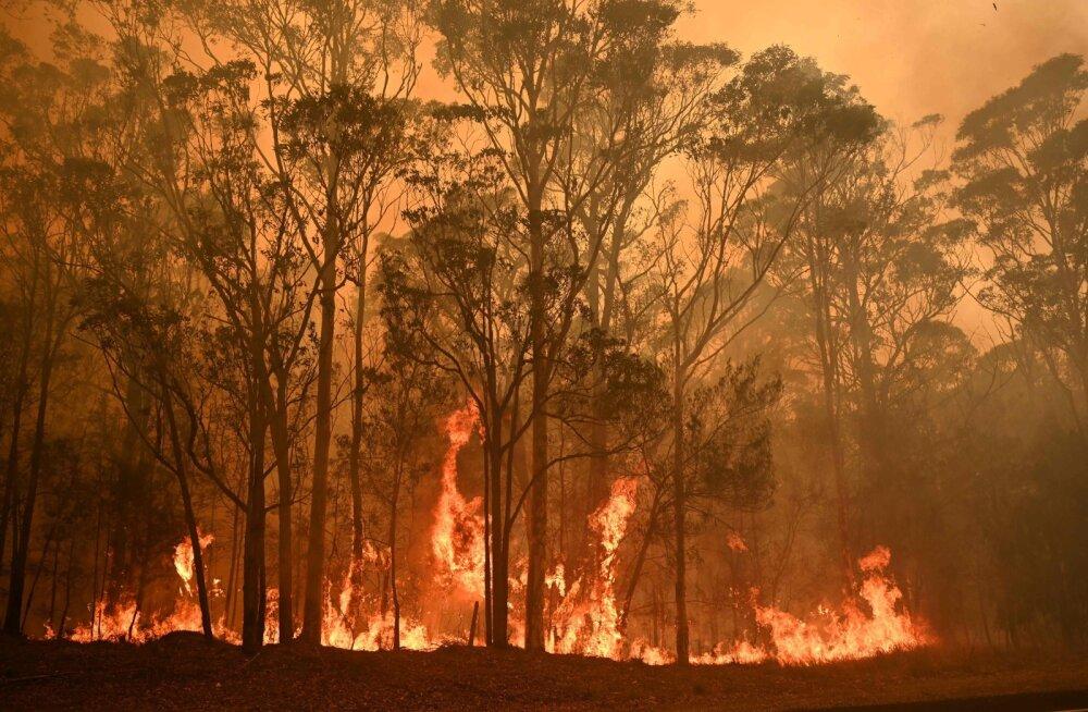 Tennisestaarid osalevad Austraalias metsapõlengutega võitlemiseks korraldataval heategevusmatšil