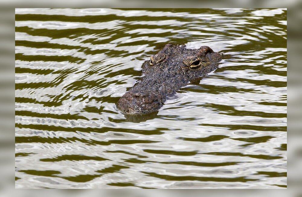 Krokodill Lõuna-Aafrikas