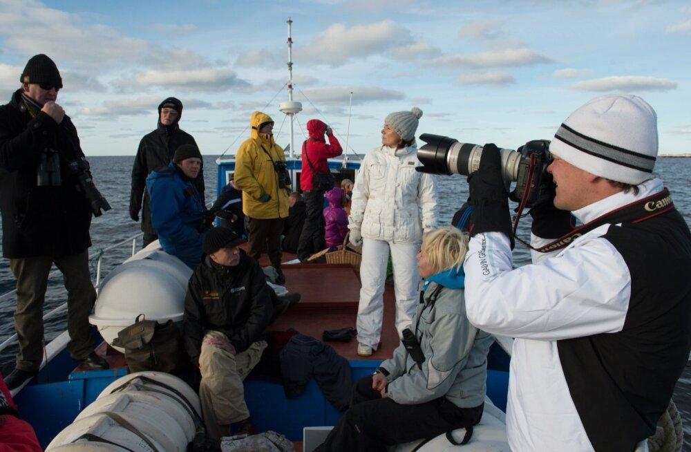 Где посмотреть на тюленей в Эстонии?