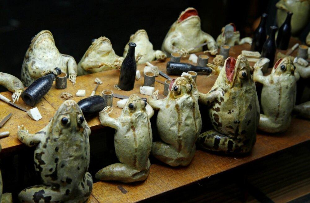 Музей лягушек в Швейцарии
