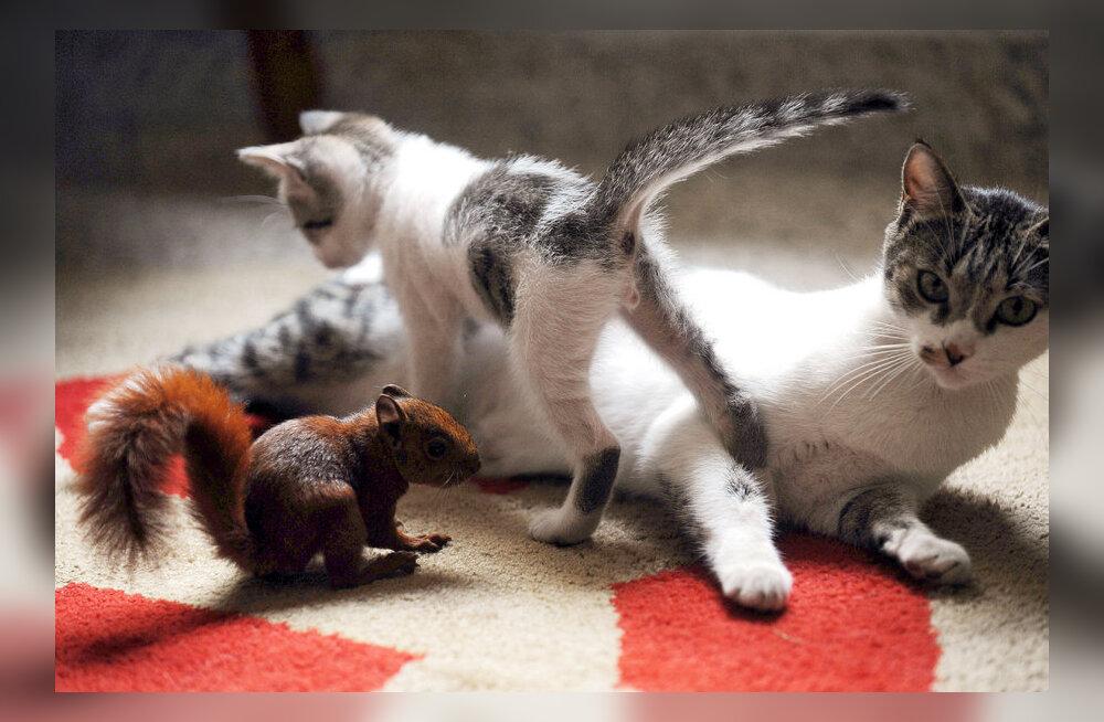 IMEARMAS FOTO: Kassiema adopteeris oravapojad