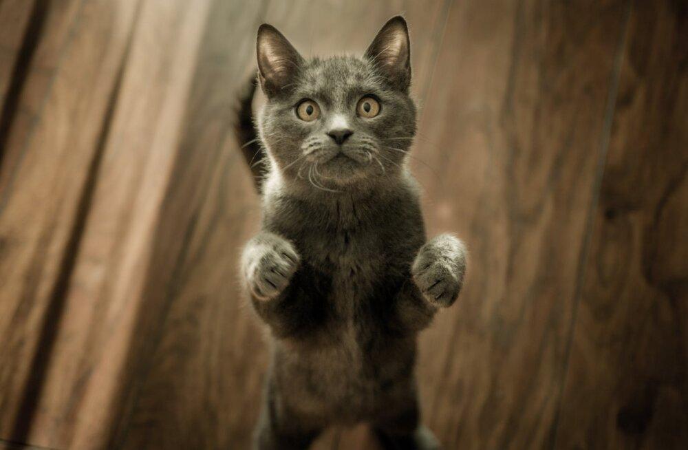 В США кошка спасла себе жизнь и стала звездой
