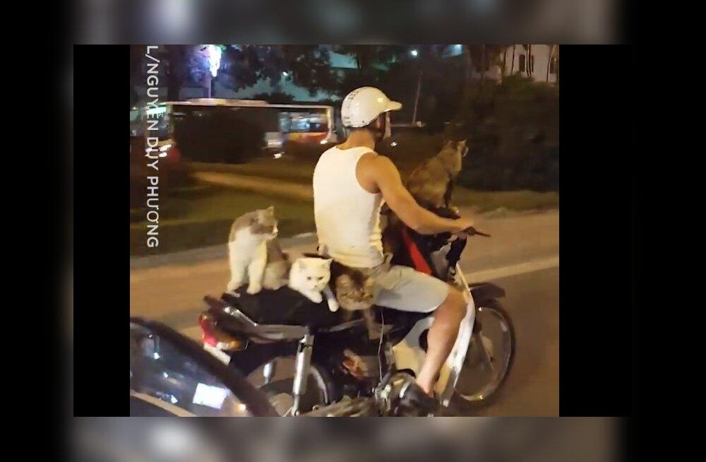 Naljakas VIDEO | Ei ole asja, mida ühe motorolleriga transportida ei saaks
