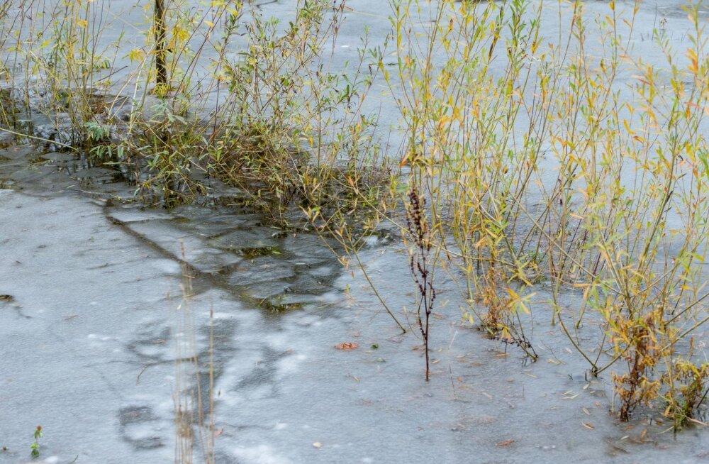 Otepää vallas Pühajärvel vajus kalamees läbi õhukese jää. Kallas oli umbes 50 meetri kaugusel