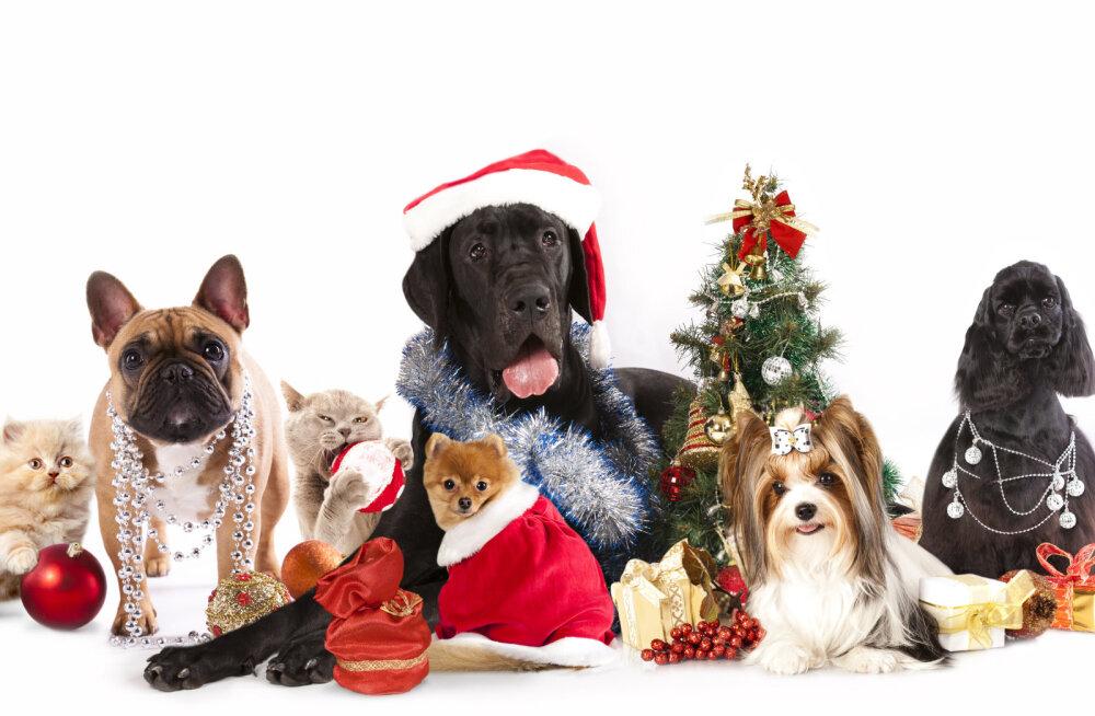 <div>Kordamine on tarkuse ema: ohud, mis varitsevad sinu lemmikut jõulupühade ajal</div>