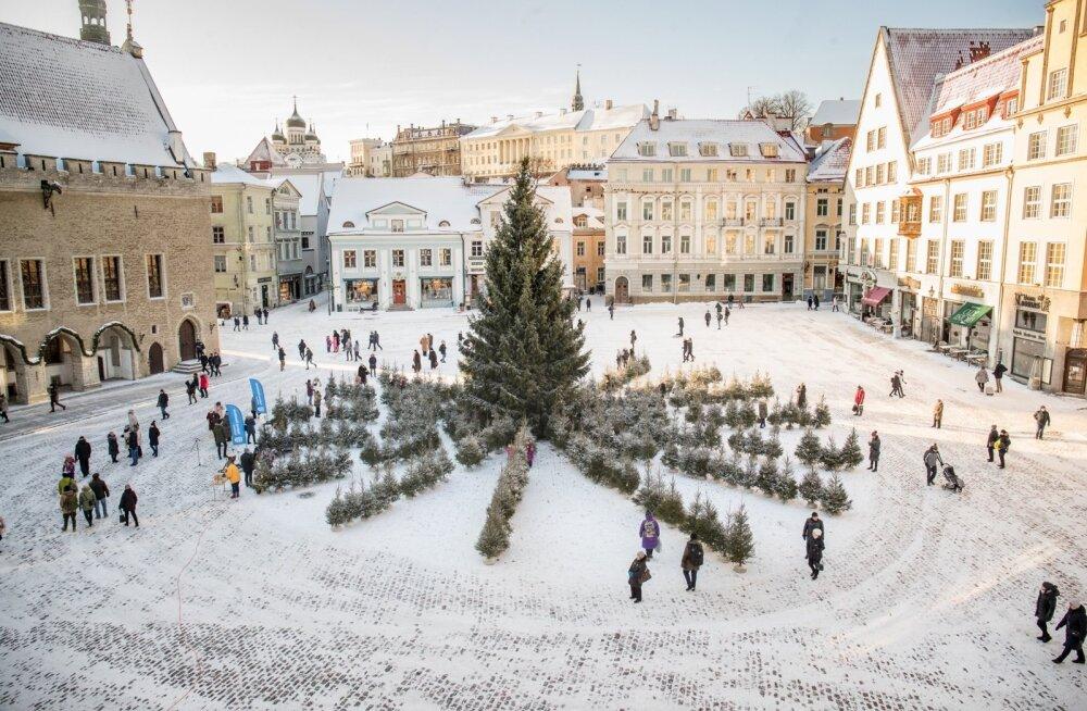 Tallinnas Raekoja platsil avati kuuskedest Päikeselabürint