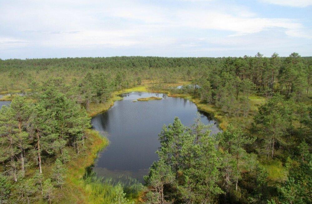 Эстонская диковинка для гостей страны