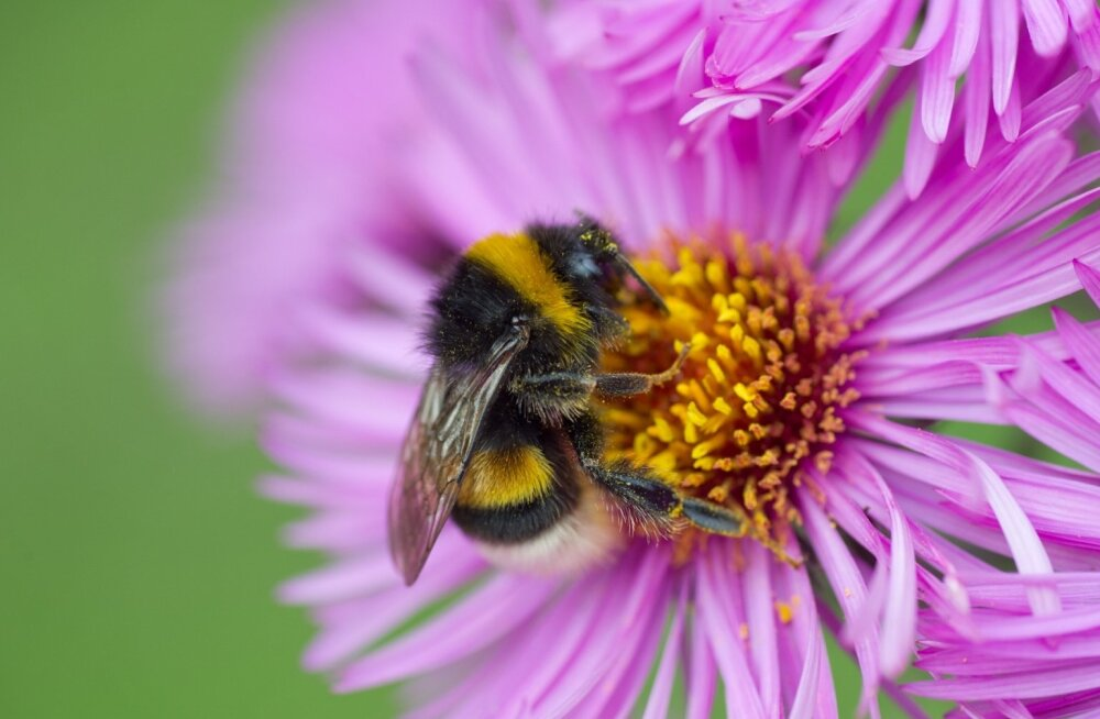 Teadlaste uus avastus – pestitsiidid püsivad õitel veel seitse päeva