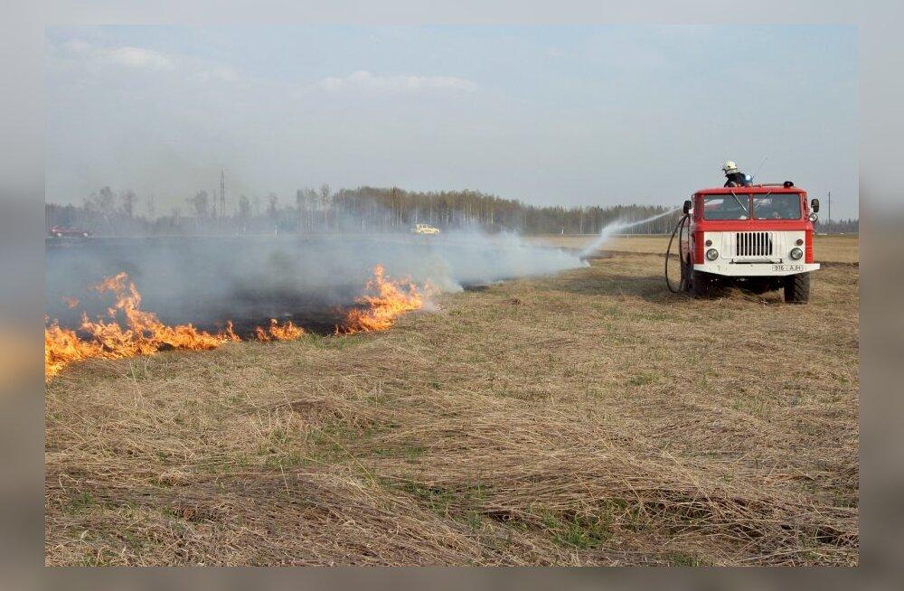 Päästeamet on taas hädas kulupõlengutega: eile põles Narva maantee ääres ligi 1000 ruutmeetrit