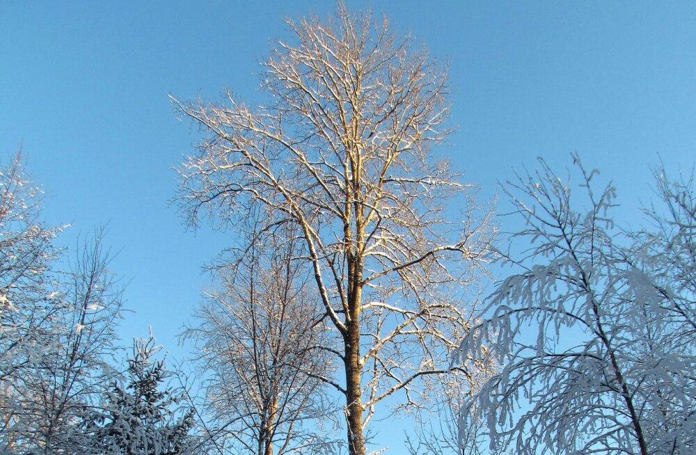 Leili metsalood | Meenutus vanast haavatukast