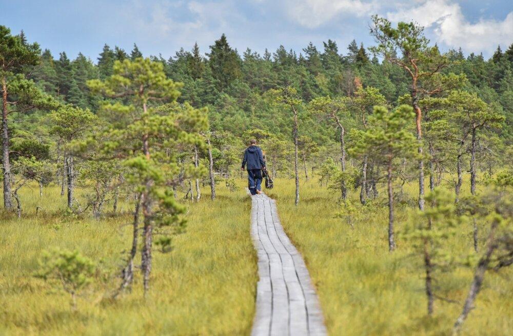 Эстония вошла в ТОП лучших стран для экотуризма