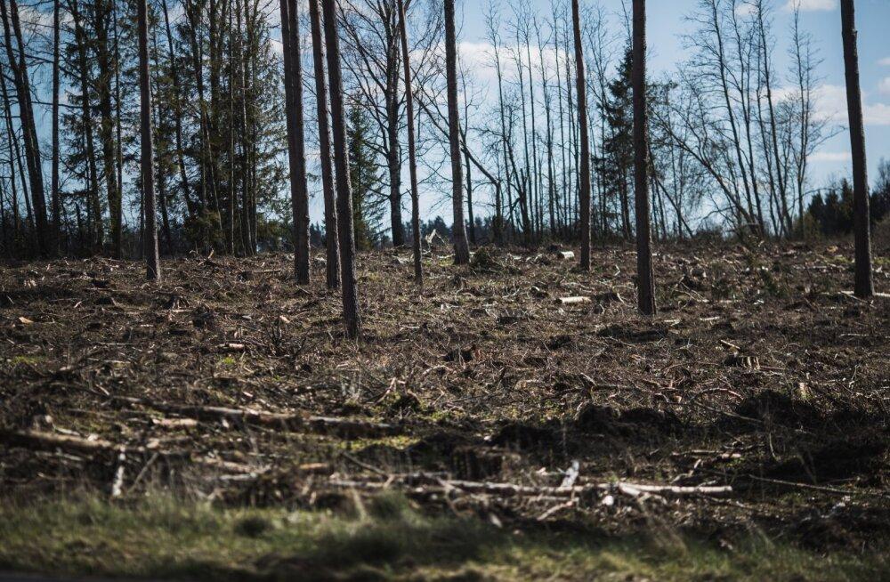 Metsade raie.