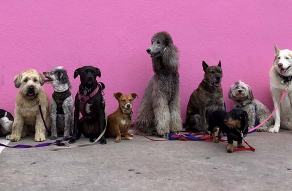 TEST | Mitu koeratõugu sa foto järgi ära tunned?