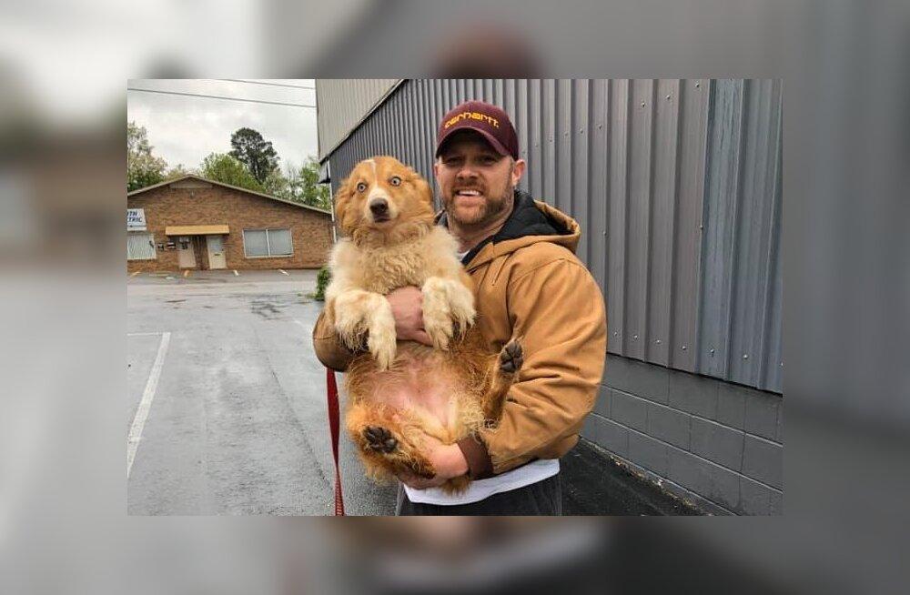 LIIGUTAVAD FOTOD | Pere tornaado käest päästnud koer ilmus kaks kuud hiljem uuesti välja