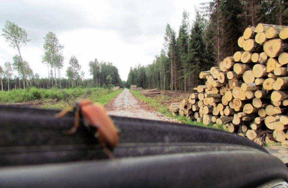 Metsade vahel