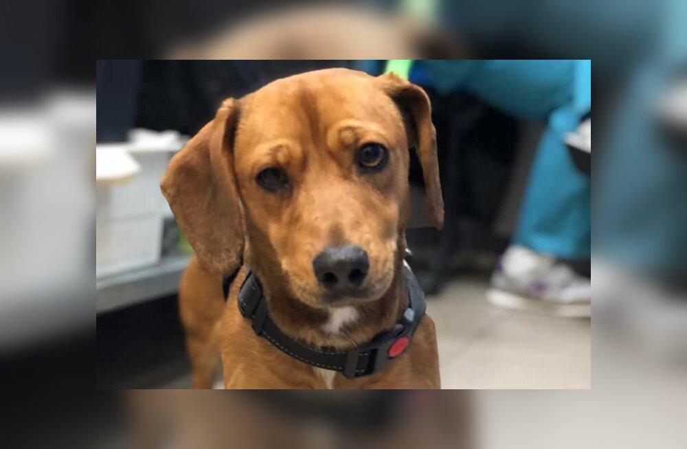 Äritsemine või heategevus? MTÜ jagab priske loovutustasu eest kodudesse Venemaalt pärit viletsa tervisega koeri