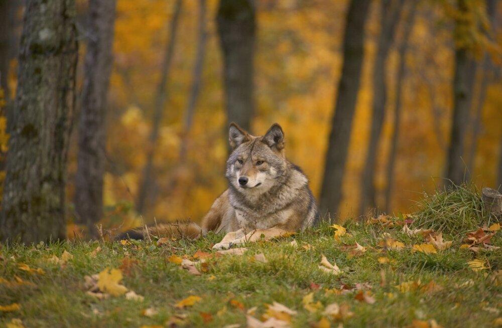 Eesti Loomakaitse Selts kutsub üles valima 2019 aasta kõige loomasõbralikumat ja -vaenulikumat tegu