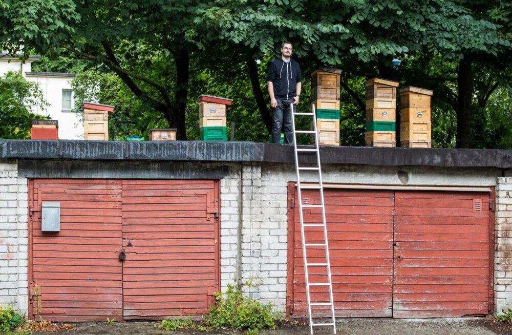 Erki Naumanis peab mesilasi ka oma koduhoovis Endla tänava graažide katusel.