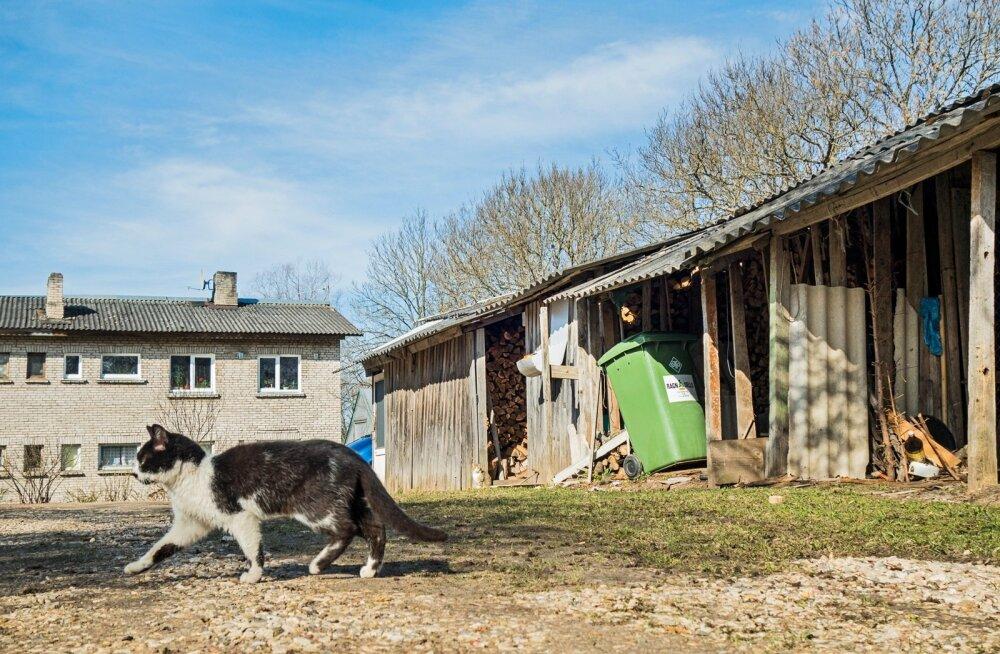 Sel Maaritsa kassil on ükskõik, kas mõnusat äraolemist võimaldav puukuur on ehitisregistrisse kantud või mitte. Ametnike meelest on aga väga oluline, et 20 ruutmeetrist suuremad kuurid saaks registrisse.