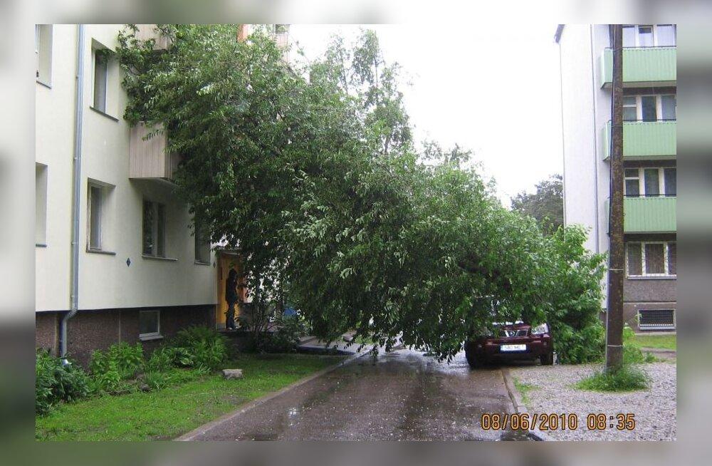 Murdunud puu