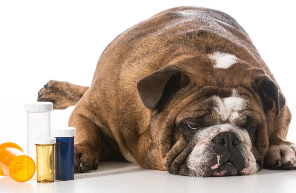 Hüva nõu: nutikad trikid, mille abil meelitada koera tabletti võtma