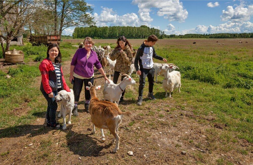 Lepaniidi mahetalus on talutöödel abiks vabatahtlikud Jaapanist, Iirimaalt, Hongkongist ja Itaaliast.
