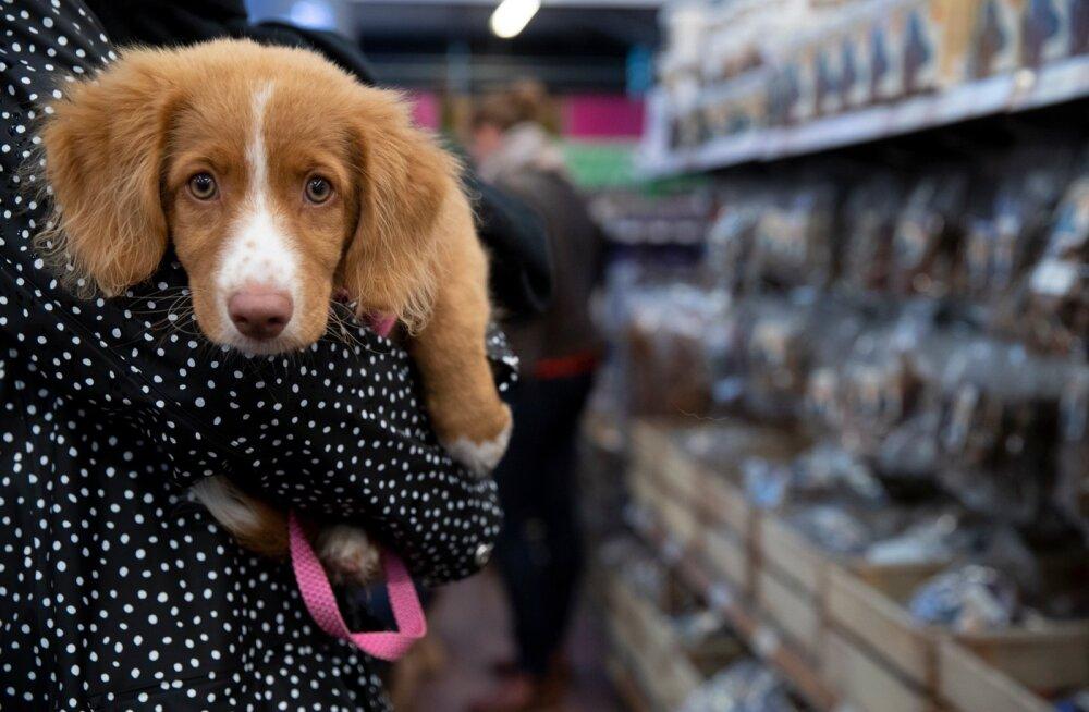 Ветеринарный департамент Эстонии предупреждает: от путешествия с собаками в Норвегию стоит отказаться